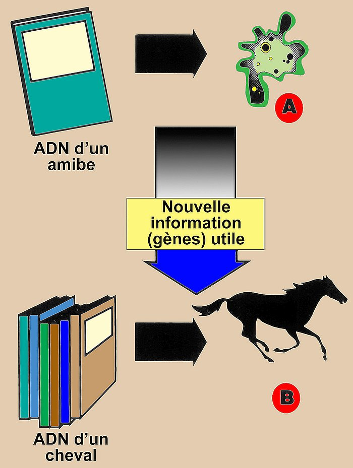 14235-dna-information