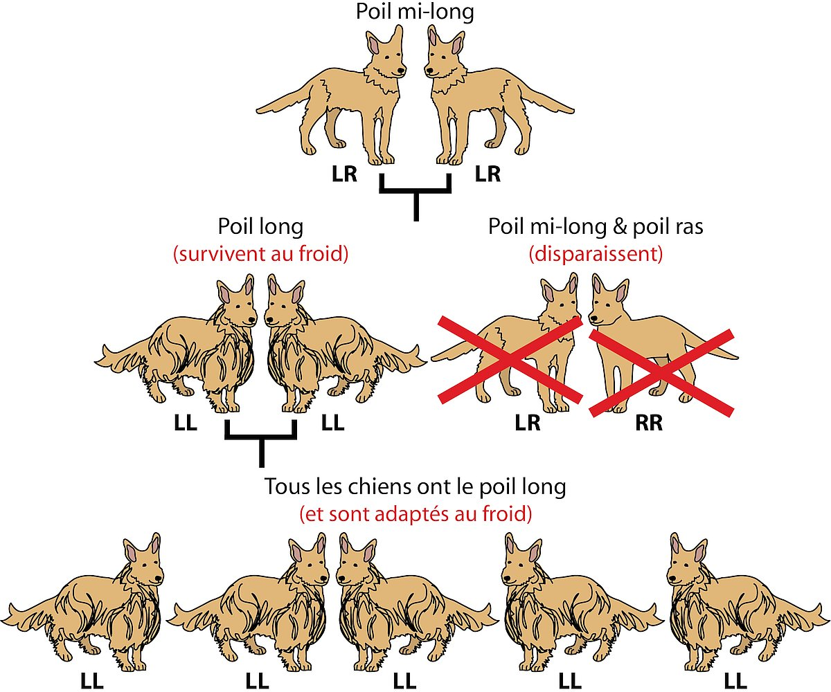 14235-dog-fur