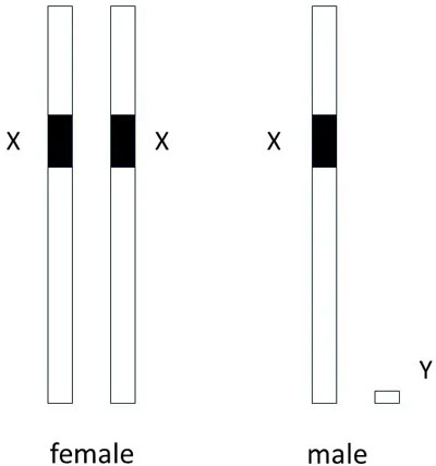 chromosome-pairs