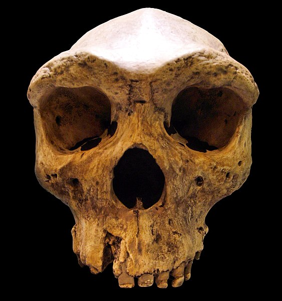 Broken-Hill-Skull