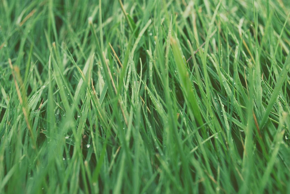 grass-wet