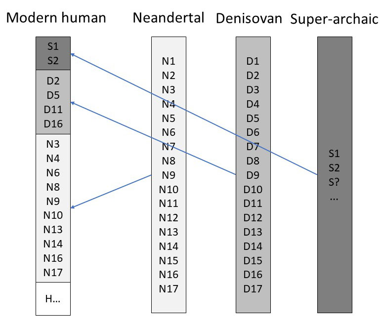super-archaic-groups