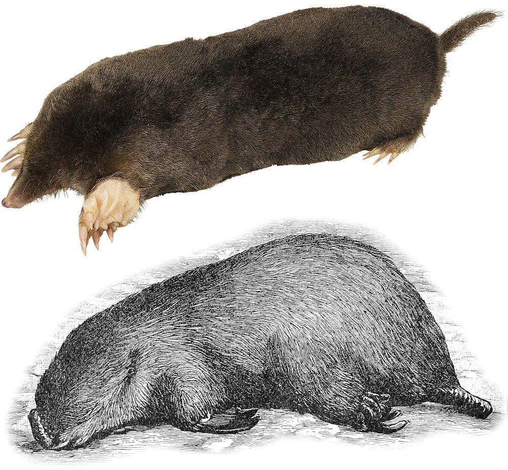 14365-moles