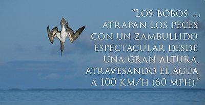 14493-diving-bird