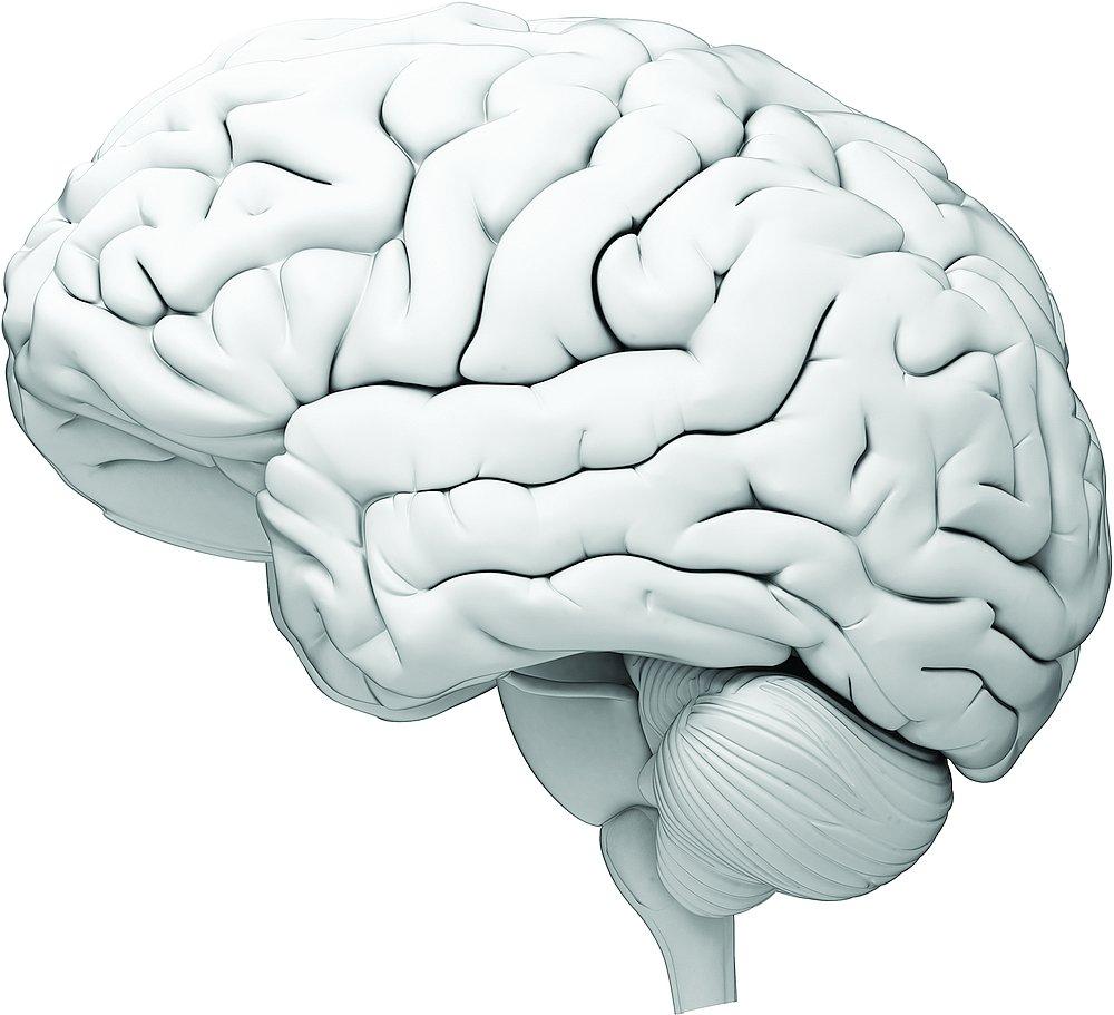 14517-brain