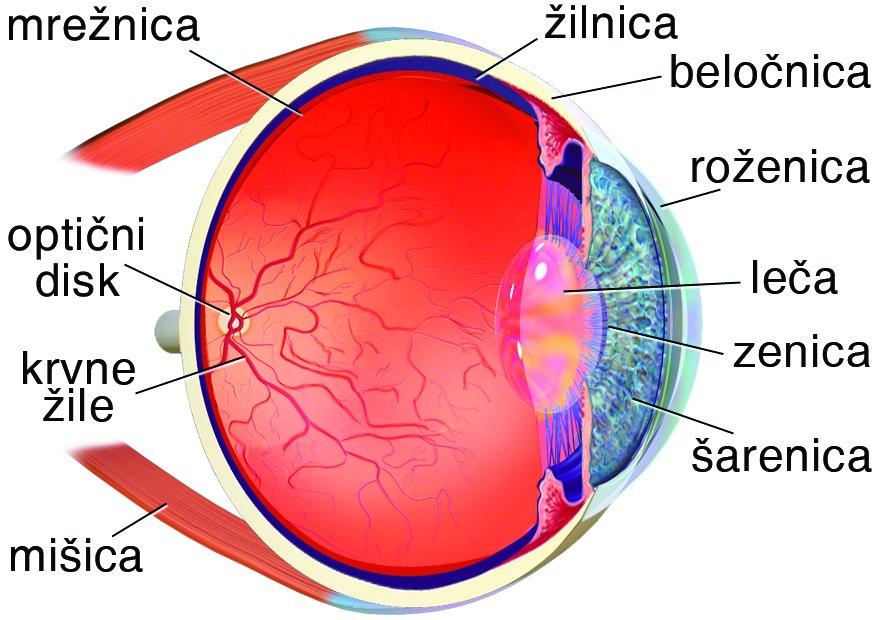 14517-eye