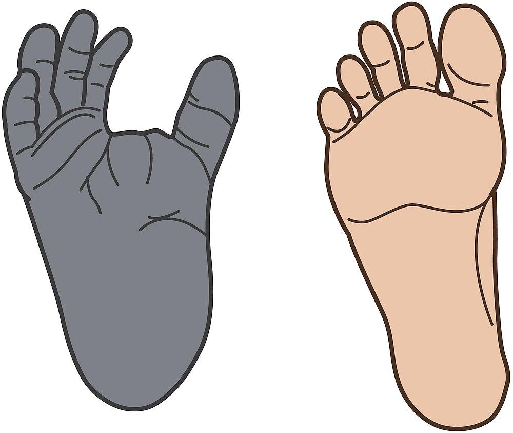 14517-feet-chimp-human