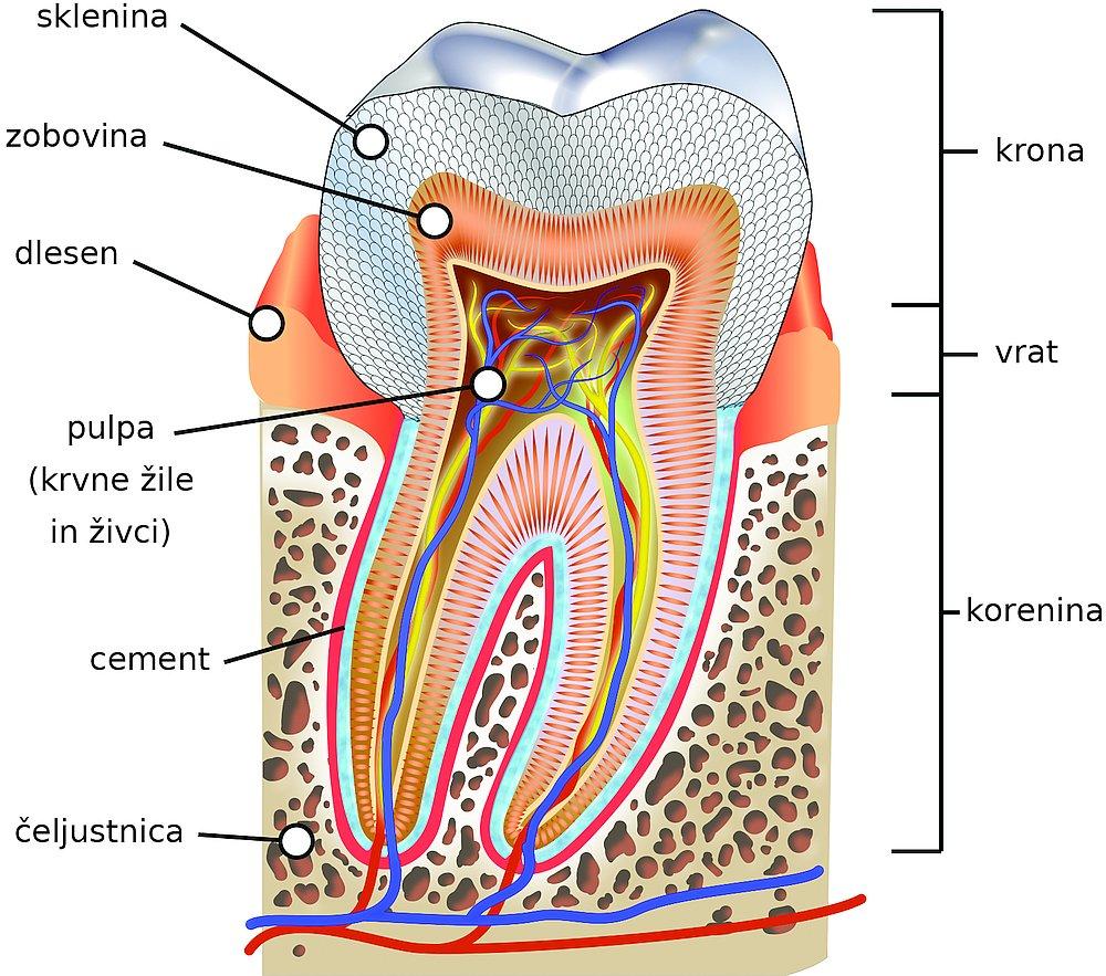 14517-molar