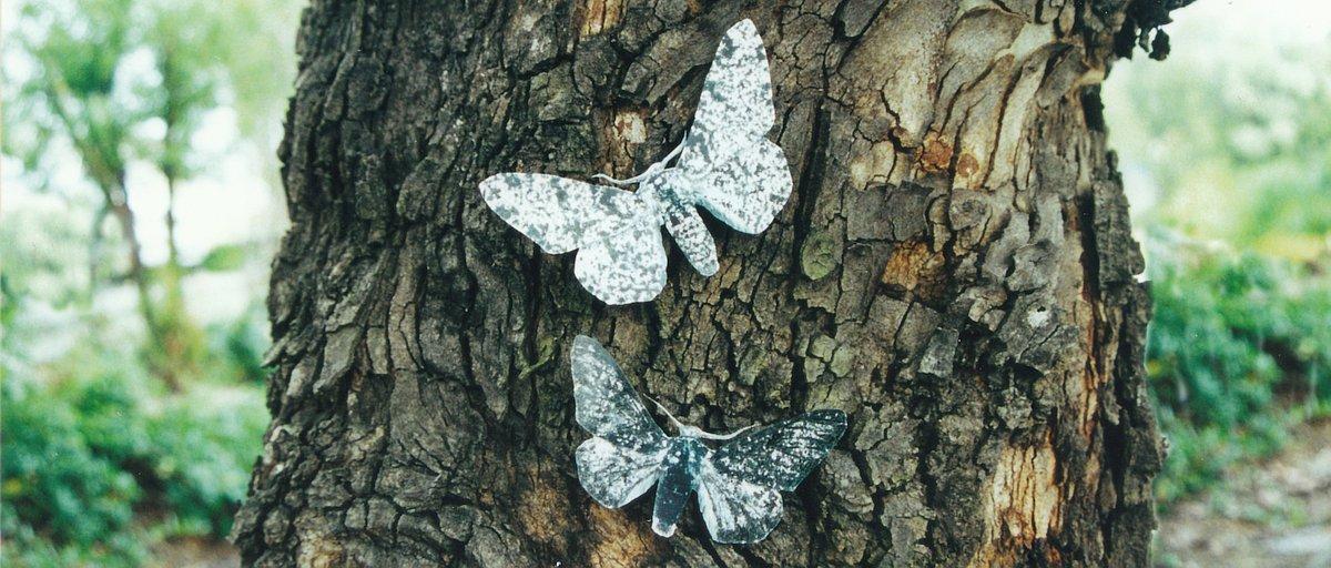 14520-moths