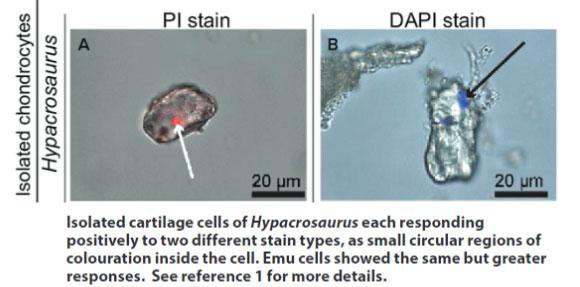 DNA-Detected-diagram