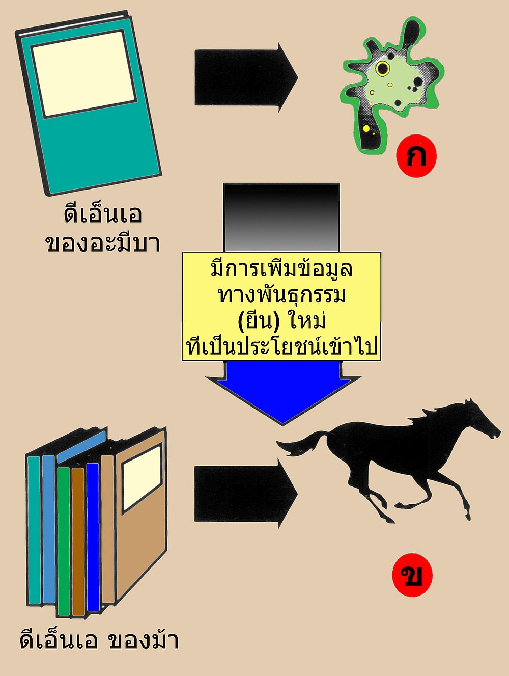 14535-dna-info-bw