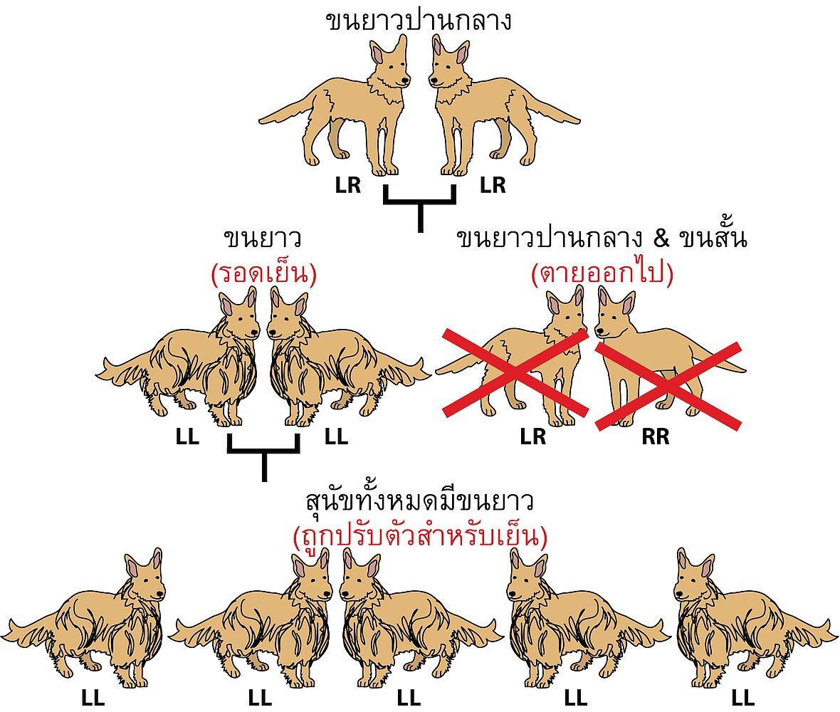 14535-dog-fur