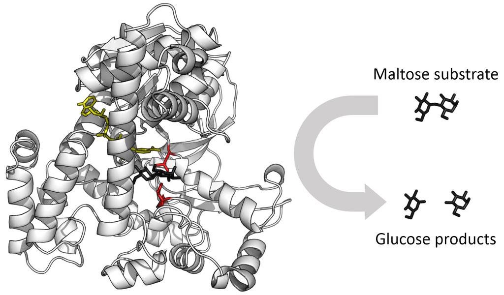 Glucosidase-enzyme
