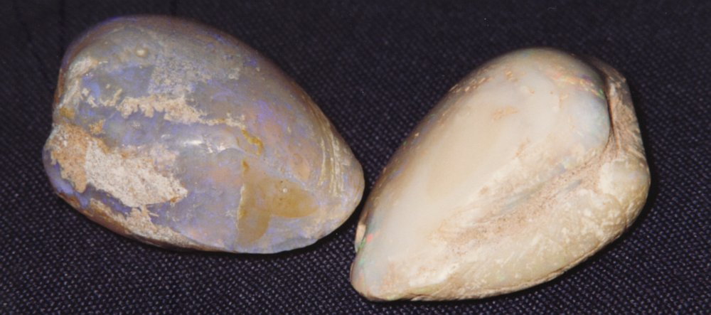 14736-opalised-shells