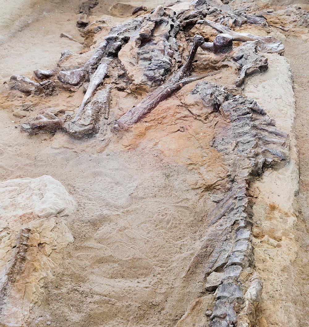 14784-dino-fossil