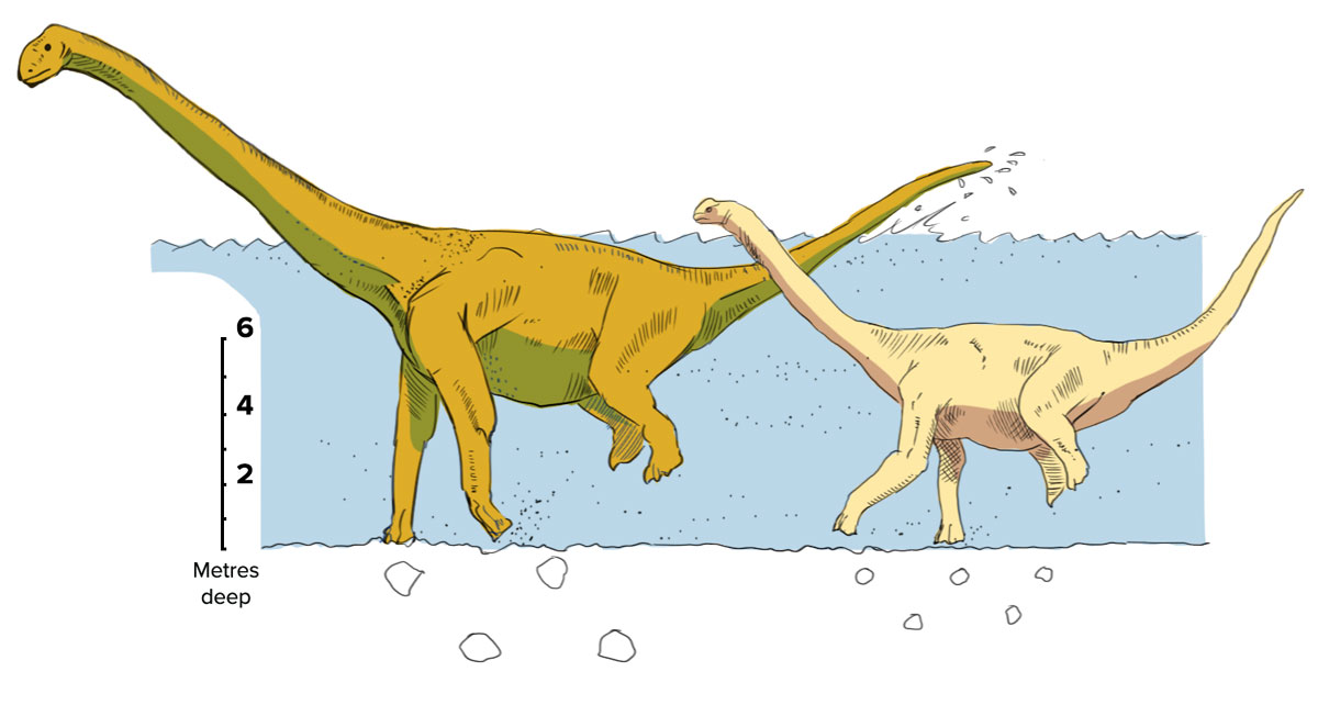 large-and-small-sauropod