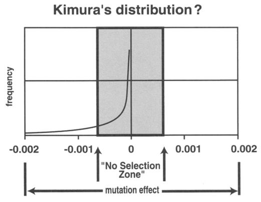 kimuras-distribution