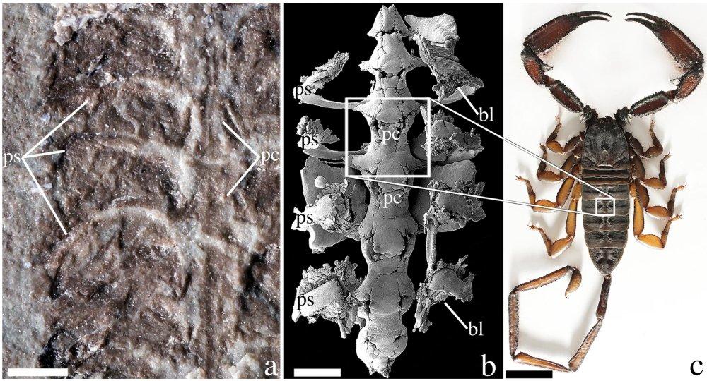 14849-scorpion-diagram2