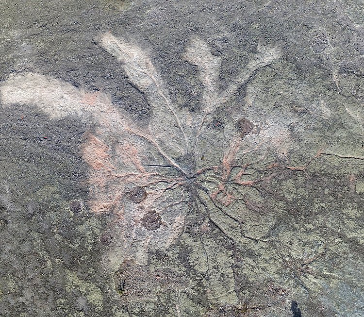 14853-tree-roots-fossil