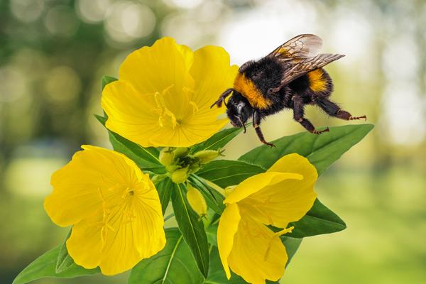 hear-bee-make-nectar