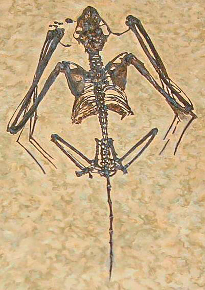 Fossil-remains-Icaronycteris