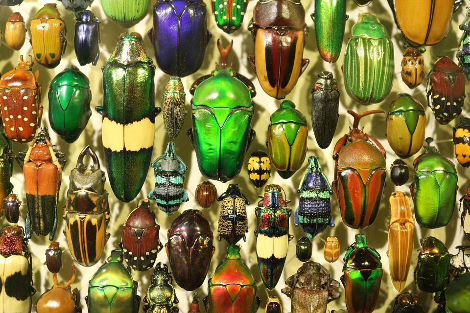 random-bugs