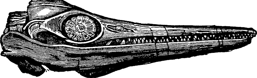 Jurassic-Ichthyosaur