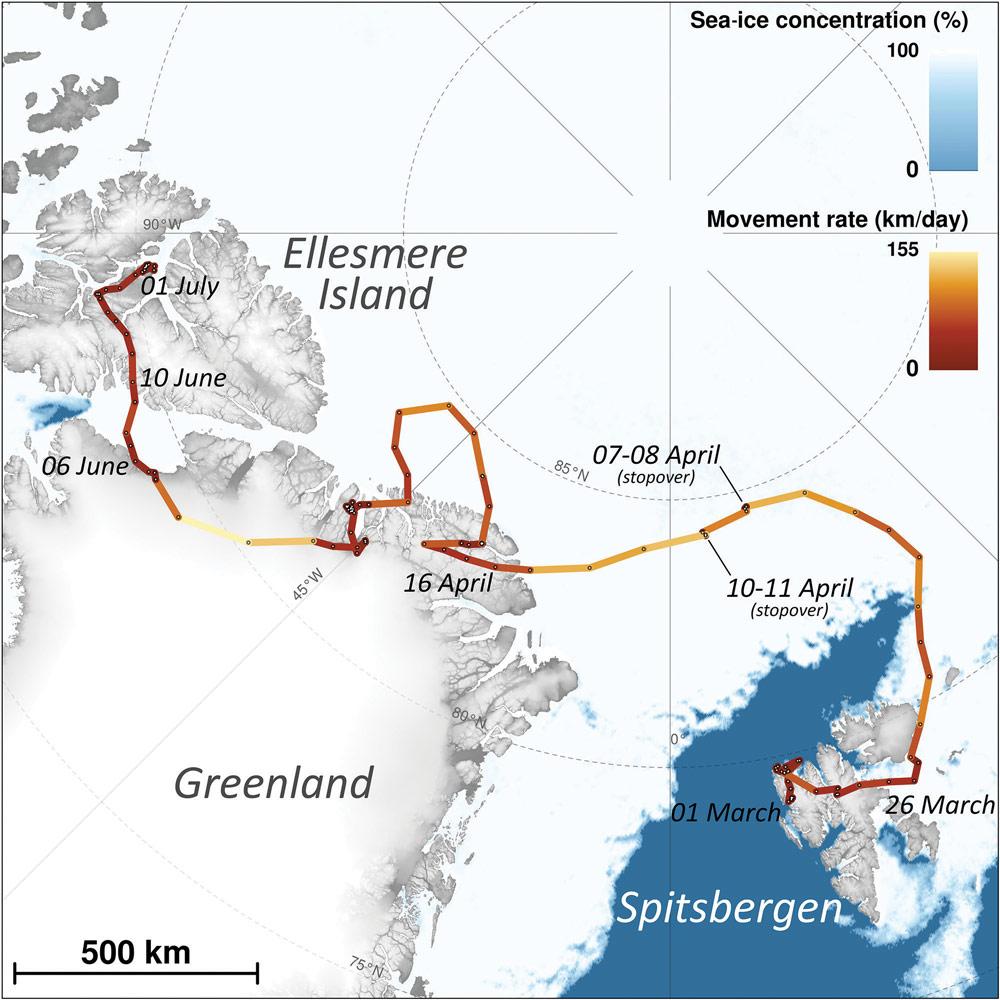 arctic-fox-journey