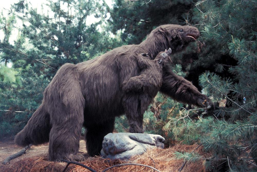ground-sloth