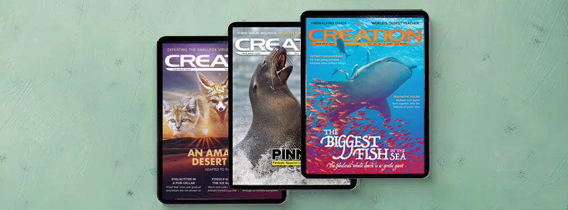 magazine-electronic-spread
