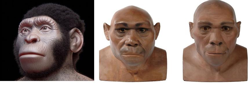 Homo-naledi_-Homo-erectus