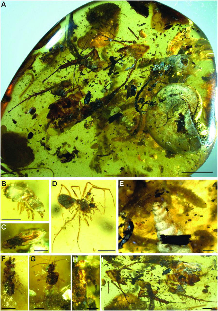 Amber-inclusions