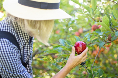 fruit-of-sanctification