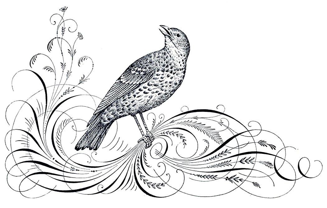 15190-calligraphy-bird
