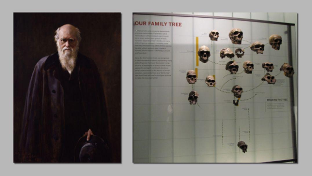 darwin-skulls
