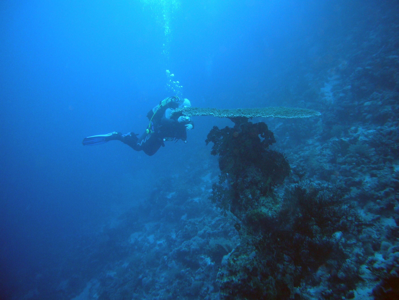 diving-974385