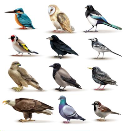 species-were-designed-to-change