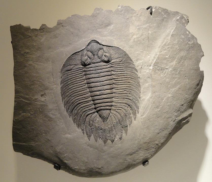 arctinurus-boltoni