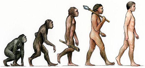 evolutionary-diagram