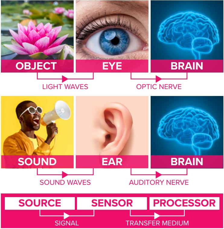 sight-hearing