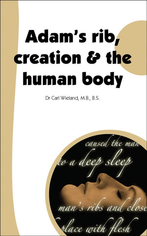 Adam's rib, creation & the human body