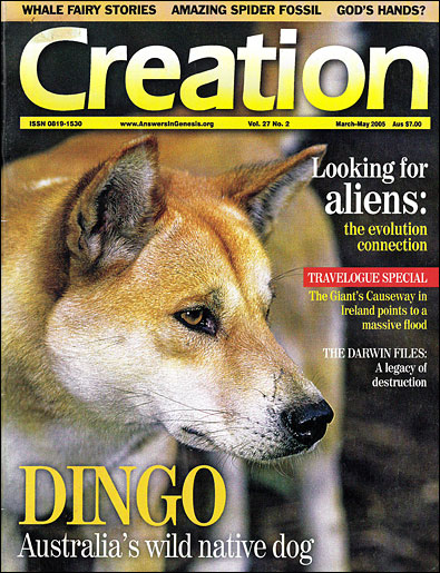 The Australian dingo a wolf in dogs clothing - creation com