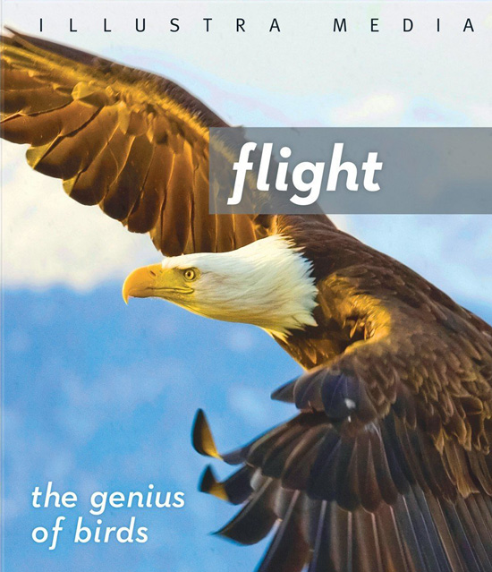 Flight: The genius of birds (Blu-ray)