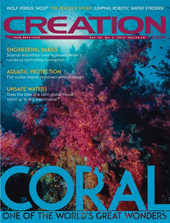 Creation magazine 1yr subscription + FREE Video download