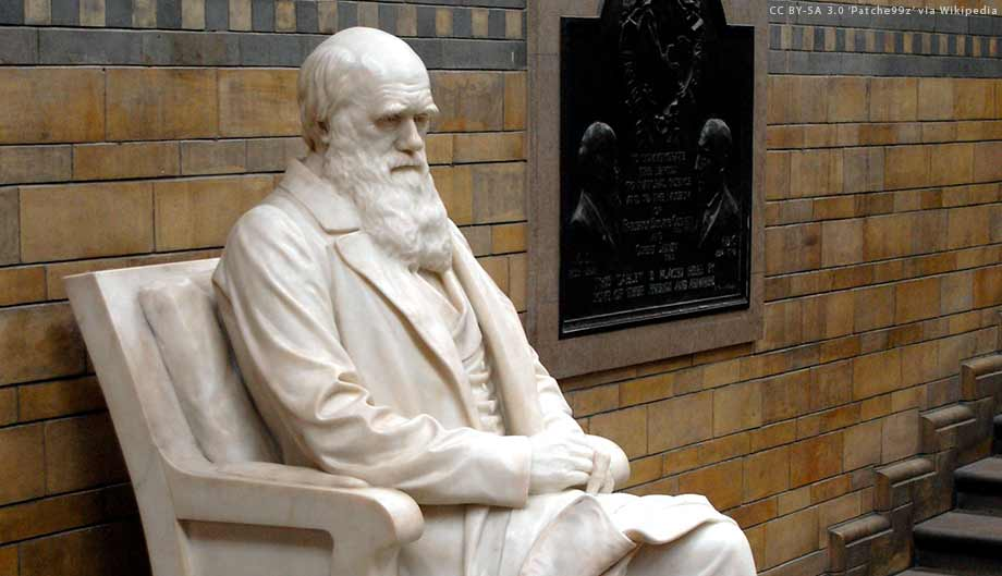 Darwin's statue, racism, and the Natural History Museum, London. - creation.com